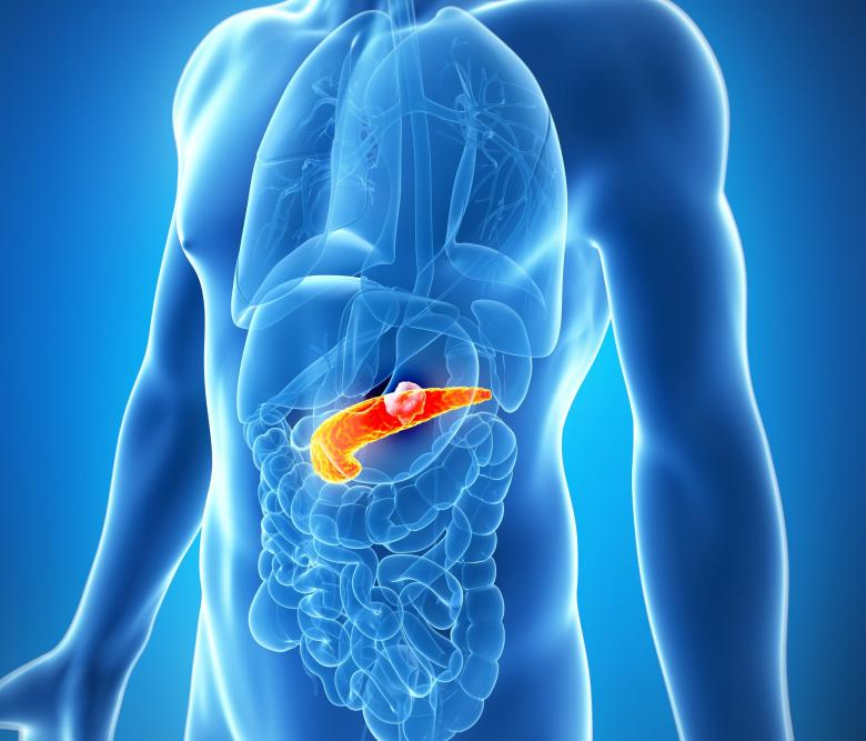 Pancreas serve in the human body
